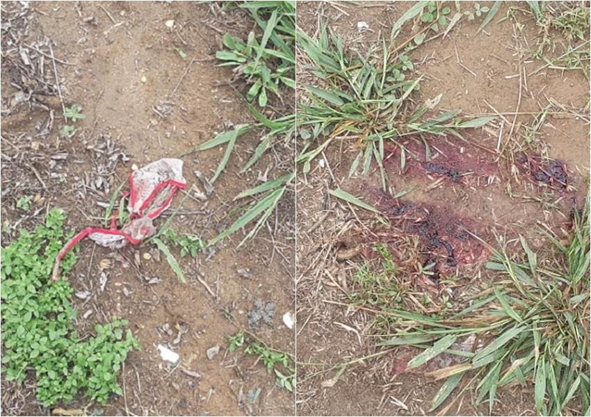 Mulher é encontrada morta a facadas em rodovia do sul da Bahia; polícia suspeita que vítima foi estuprada