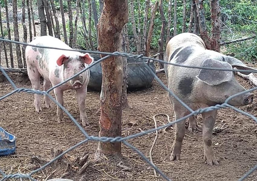 Furtos são esclarecidos e animais recuperados em Rio do Antônio