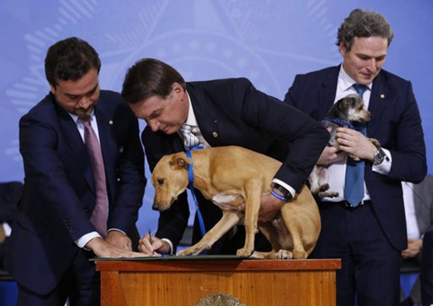 Sancionada lei que aumenta punição para maus-tratos de animais