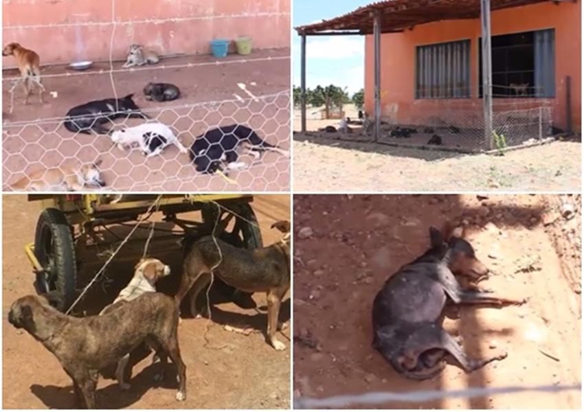 MP instaura Inquérito Civil a fim de apurar a suposta prática de abusos contra animais e negligência pelos gestores do município