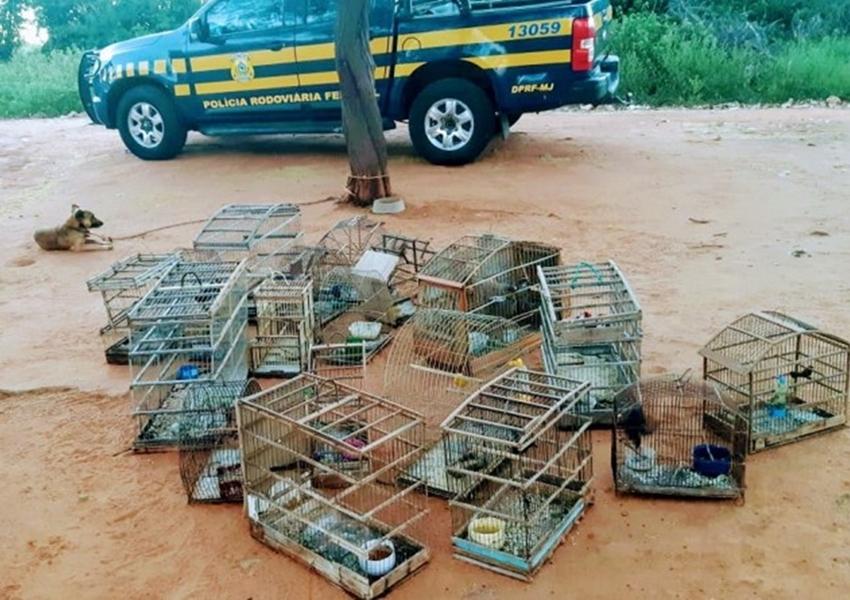 Lagoa Real: PRF resgata 44 aves silvestres criadas em cativeiro
