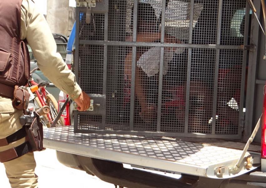 Acusado de furto de celular e dinheiro é detido pela Polícia Militar em Brumado