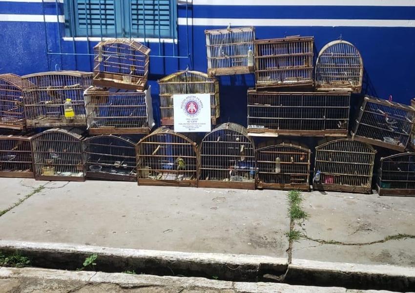 Livramento: Guarnição da 46ª CIPM apreende animais silvestres em uma residência no Bairro Estocada