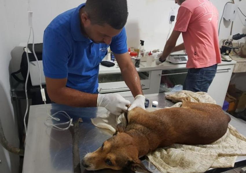 Cão é resgatado por PMs após passar 3 dias abandonado em casa em Euclides da Cunha