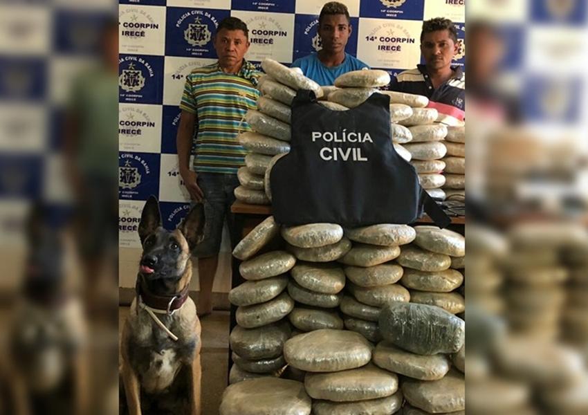 Cadela da Polícia Civil localiza 132 kg de maconha enterrados em Irecê