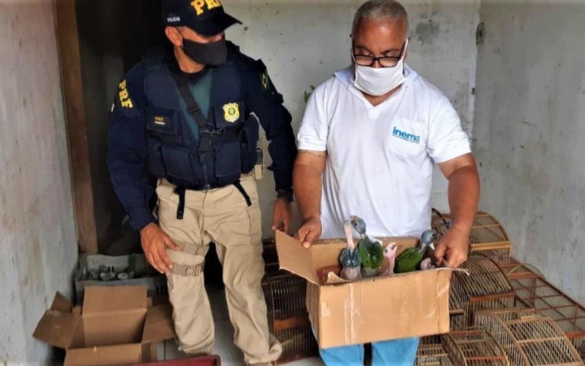 Operação policial resgata mais de 450 aves em situação de maus-tratos no Sul da Bahia