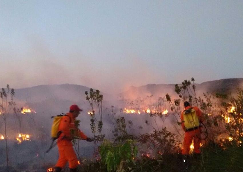 Três municípios baianos receberão brigadas para prevenir e combater incêndios florestais