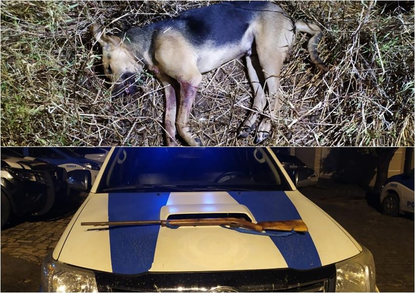 Homem é encaminhado à delegacia após atirar em cachorro em Paramirim