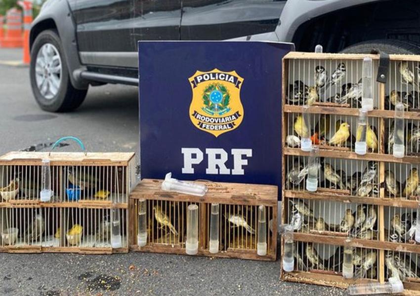 Conquista: Mais de 100 pássaros silvestres são resgatados na BR-116; duas pessoas são autuadas por crime ambiental
