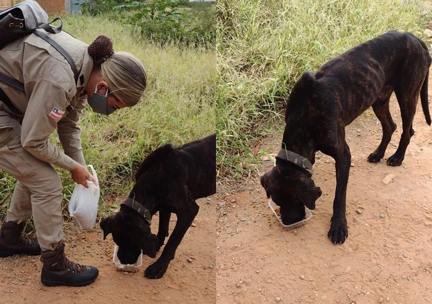 Livramento: Policial Militar lotada na 46ª CIPM realiza resgate de cão abandonado