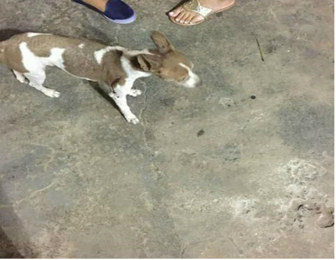 Procura-se cachorro desaparecido em Brumado