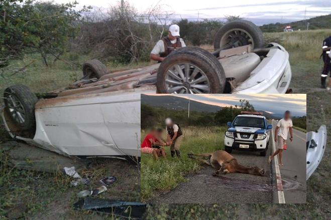 Carro com estudantes de Livramento colide contra animal e capota na BA-262