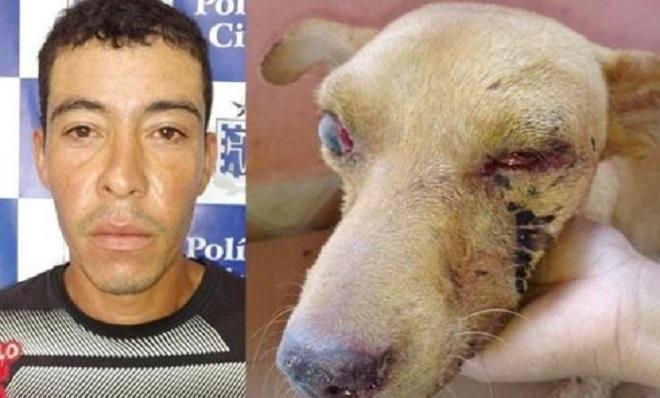 Homem é preso após espancar e perfurar os dois olhos de cachorro em Itambé