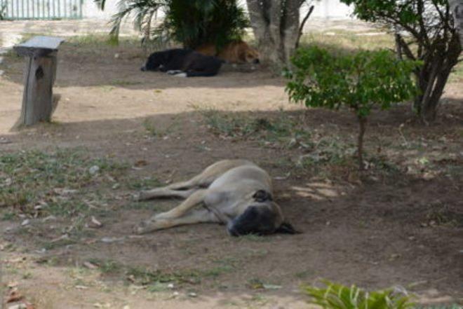 Vitória da Conquista: cachorrada gera reclamações em Hospital Municipal