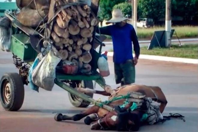 Cavalo 'desmaia' por não suportar carga em carroça e dono é detido