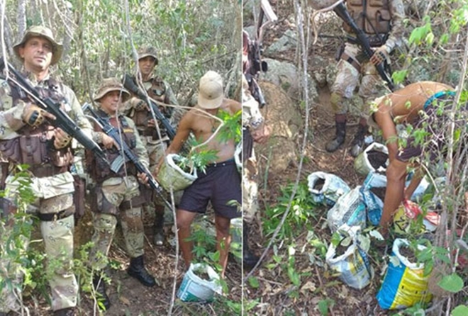 Chapada Diamantina: polícia apreende cerca de 300 pés de maconha