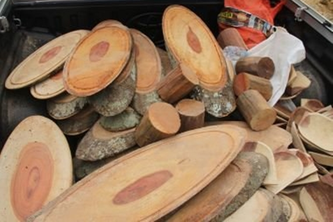 Operação da PF combate extração e comércio ilegal de madeira em Porto Seguro